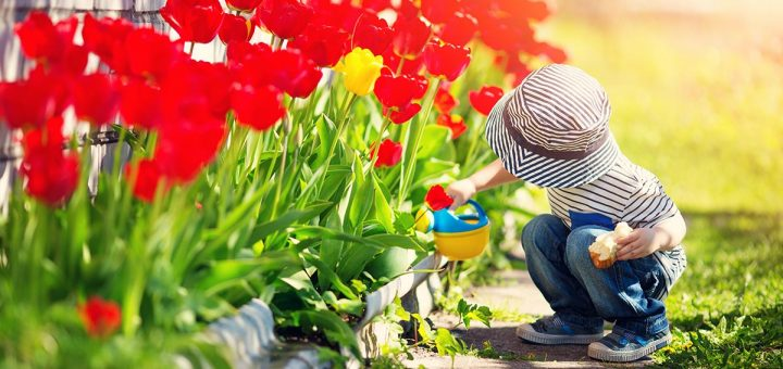 A child waters blooming flowers at the start of spring
